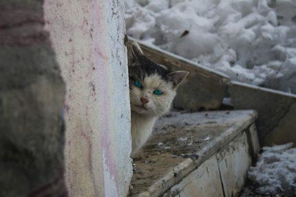 画像に alt 属性が指定されていません。ファイル名: adorable-animal-cat-cute-342161-1-430x286.jpg